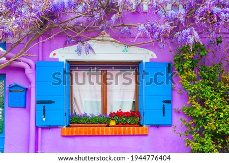 Window and violet flowers on the violet painted facade of the house. Colorful architecture in Burano island, Venice, Italy.