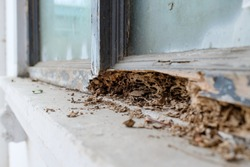 Window frame had been damaged by termites, Selective focus at termite nest.