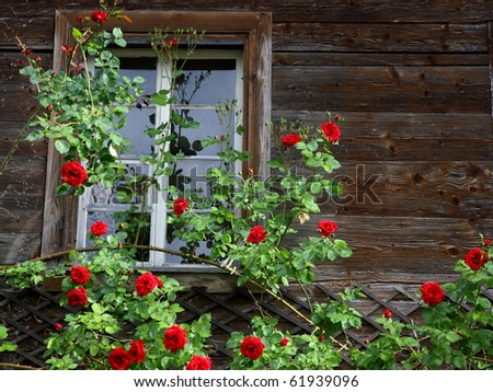 window of a old wooden house entwinded by beautiful red roses