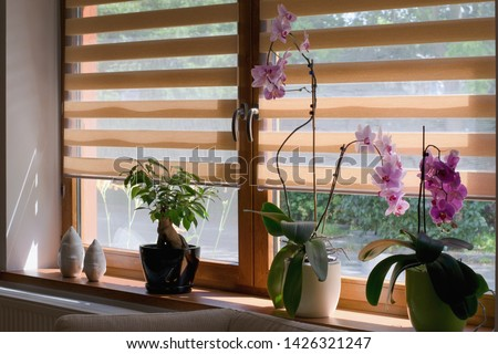 Window roller, duo system day and night. Morning light shining through the window.