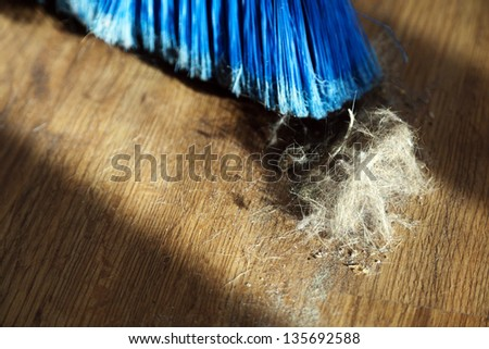 Window sunlight gives a romantic atmosphere to a blue broom surrounded by dust and a canine originated fur ball. Shallow depth of field.