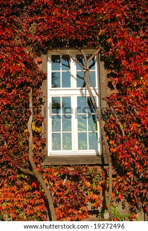 Window surrounded by grapevine foliage in fall colors
