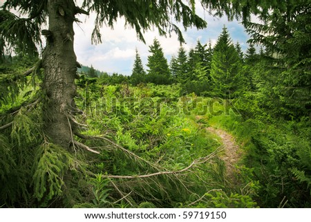 Window to the sky in the coniferous forest - stock photo