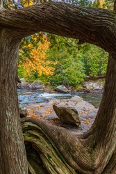 Window view though Oak trees of river rapids and forest in autumn