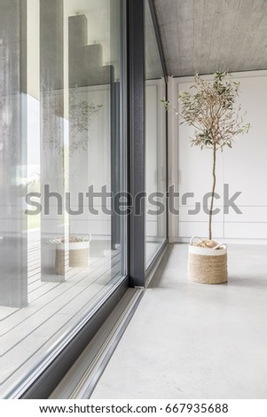 Window wall and minimalistic tree in living room #667935688