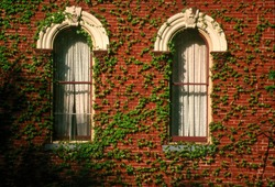 Window with ivy on red brick on the Harry Packer mansion in Jim Thorpe, Pennsylvania