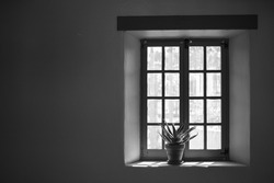 Window with Plant in Black and White