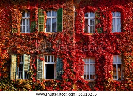 Windows in autumn