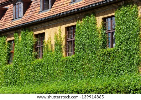 Windows in wall of green plant.