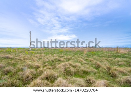 Windswept Shoreline Grasses and Tufts With Single Dead Tree and Blue Sky