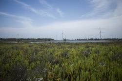 windturbine farm at kalpitiya lagoon sri lanka
