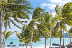 Windy blowing coconut at the beach before storm on Island