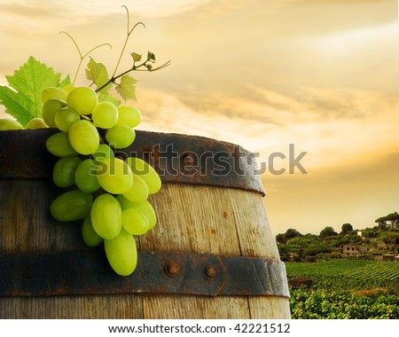 Wine barrel and grapevine with vineyard in background - stock photo