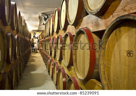 wine barrels in wineyard cellar