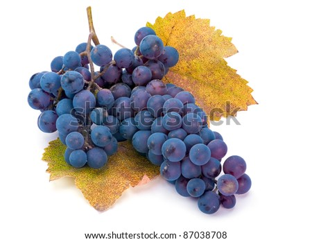 Wine blue grape with leaf on white background