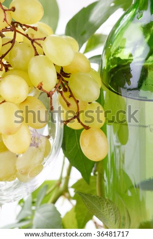 wine bottle and young grape