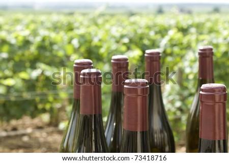 Wine bottles in vineyard from, bourgogne,burgundy. France.