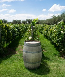 wine cask overlooking an Argentine vineyard during the summer