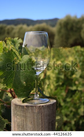 Wine glass in vineyard stood on wooden post