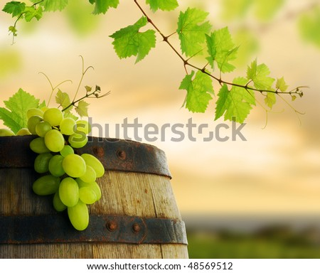 Wine grape and barrel with fresh grapevine border on background of sunset vineyard