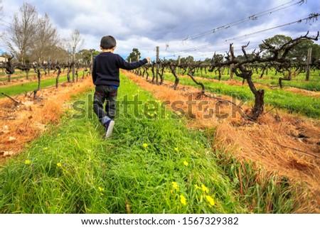 Wine grapevine farm vineyard during winter season, no grape, no leaf #1567329382