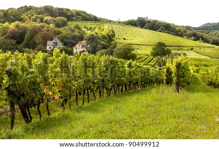 Wine hills and vineyards in the Alsace region in France