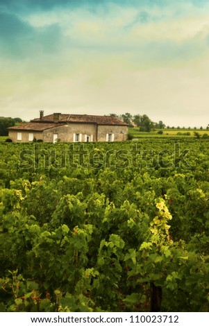 wine landscape in France
