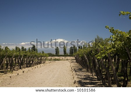 wine landscape with vineyards