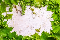 Wine leafs and wine grapes on white