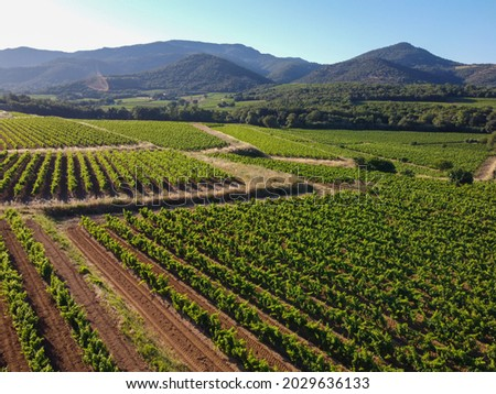 Wine making in  department Var in  Provence-Alpes-Cote d'Azur region of Southeastern France, vineyards in July with young green grapes near town Saint-Tropez, cotes de Provence wine, aerial view Stock fotó ©