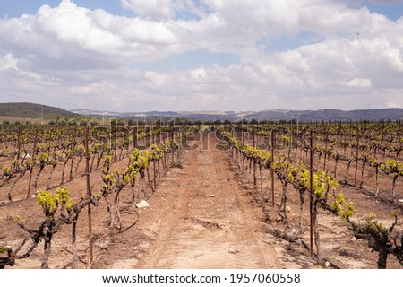 Wine making in Israel. Judean Hills Appellation. Start of vintage 2021 Photo stock ©