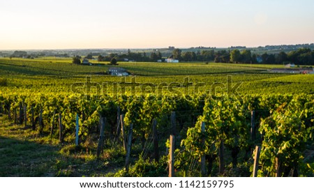 Wine making is the top source of income for the Bordeaux region in France. One of the top attractions is the medieval town of Saint Emillion, which produces red wine. #1142159795