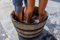 Wine making process. Harvesting. Grape stomping. Wine tourism.