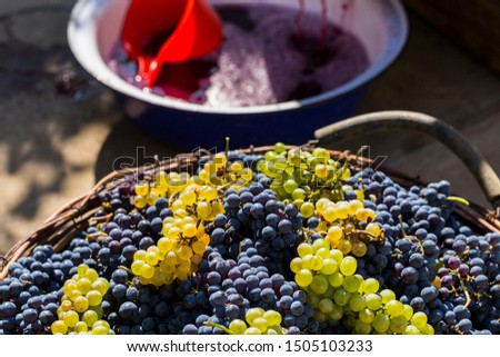 Wine-making. Technology of wine production. The folk tradition of making wine. Wine production in Moldova. The ancient tradition of grape processing.