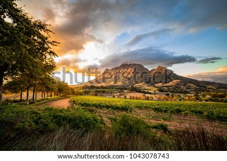 Wine region near Stellenbosch looking at Simonsberg in South Africa #1043078743