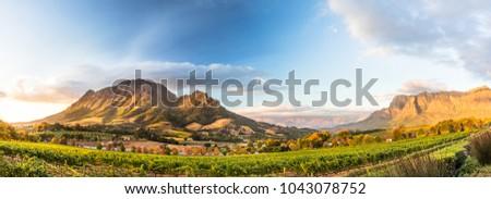Wine region near Stellenbosch looking at Simonsberg in South Africa #1043078752