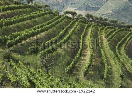 wine terraces