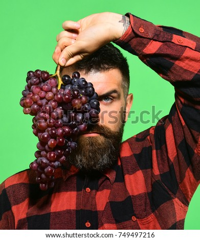 Winegrower with strict face hides behind cluster of grapes. Winemaking and autumn crops concept. Farmer shows his harvest. Man with beard holds bunch of purple grapes isolated on green background #749497216