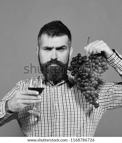 Winegrower with strict face presents product made of grapes. Man with beard holds bunch of grapes and glass of wine isolated on green background. Viticulture and autumn concept. Vintner shows harvest #1168786726