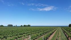 Winery Landscape Near Niagra Falls