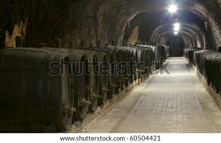 Winery underground with old wine woods