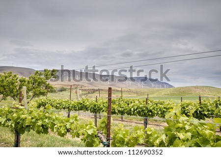 Winery Vineyard Landscape with Wine Turbine Farm on Rolling Hills