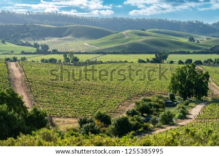 Wines from Chile are maybe the best on the world, we can see the vineyards at Casablanca, Valparaiso, thousands and thousands of grapes growing creating rows over the infinity land on an awe landscape #1255385995