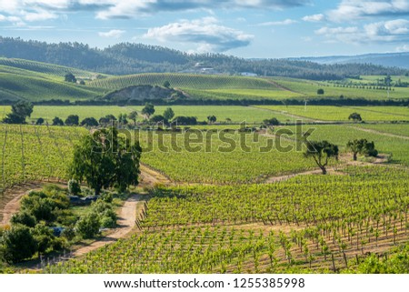 Wines from Chile are maybe the best on the world, we can see the vineyards at Casablanca, Valparaiso, thousands and thousands of grapes growing creating rows over the infinity land on an awe landscape #1255385998
