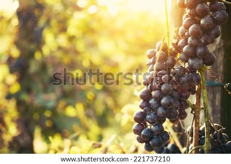 Wineyard #221737210