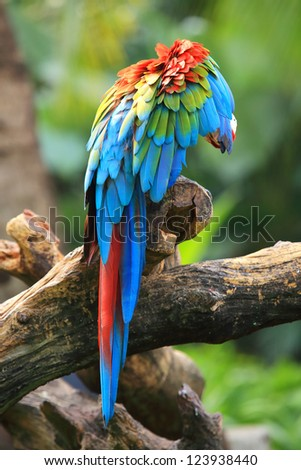 Wing of Scarlet Macaw