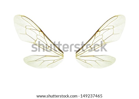 Wings of a bee isolated on a white background