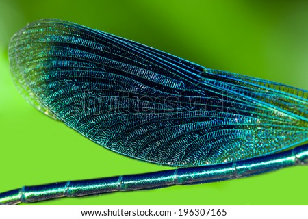 wings of a dragonfly close up...