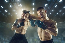 Winner screaming. Two professional fighters posing on the sport boxing ring. Couple of fit muscular caucasian athletes or boxers fighting. Sport, competition and human emotions concept.