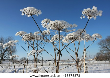 winter abstract plant snow nature cold season